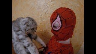 Реакция Кошки на Человека Паука 😻Scottish Fold Cat vs Spiderman