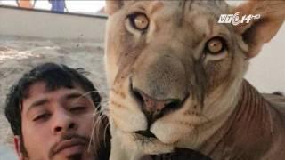 (VTC14)_Cấm đại gia nuôi hổ, sư tử làm thú cưng