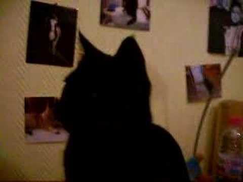 Mozart, mon chat