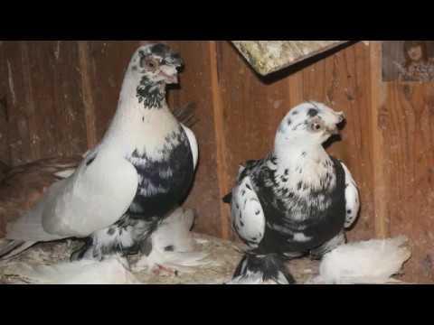 Летите голуби, летите - YouTube