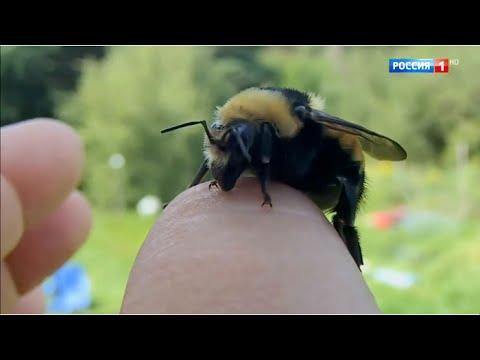 Как выглядит укус пчелы или осы