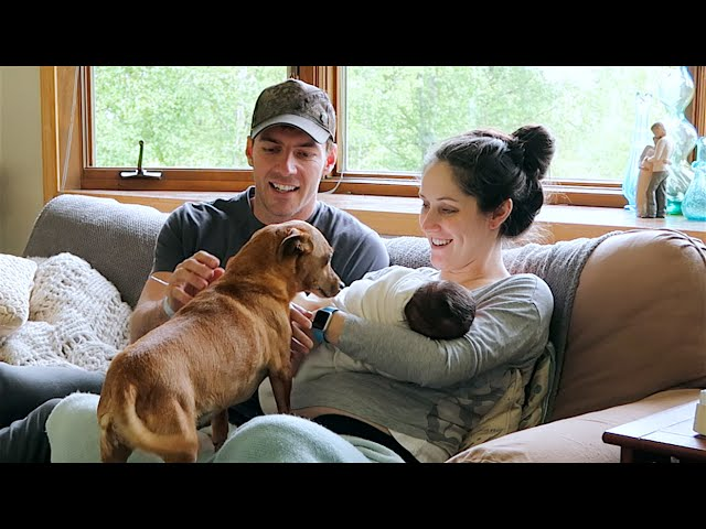Pets Meet Baby For The First Time!
