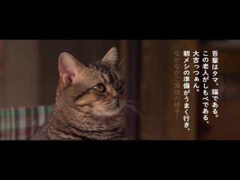 『ねことじいちゃん』特報映像