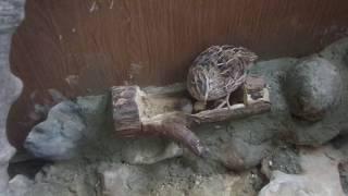 Kafesimize yumurtlama yeri yaptık