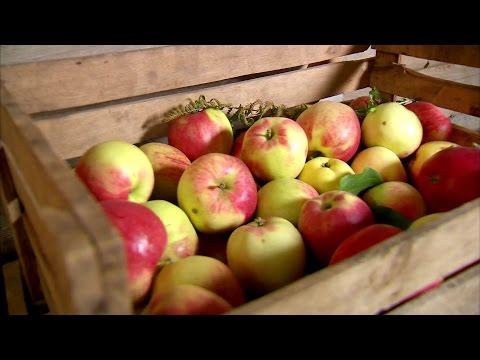 ЯБЛОКИ: как сохранить яблоки свежими - 7 дач