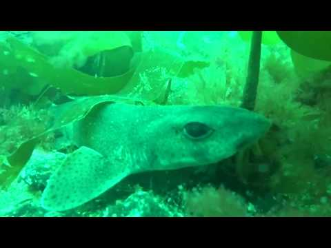 Diveworld Videos | Isle of Man part 1