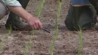 Rice farmers in Louisiana use new technology