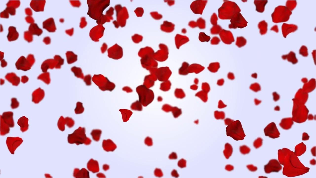falling rose petals free