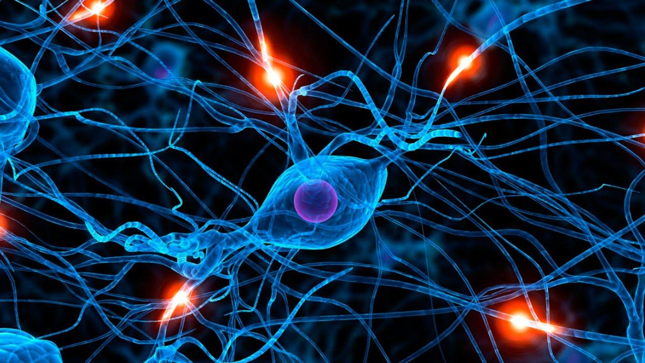Resultado de imagen para celulas