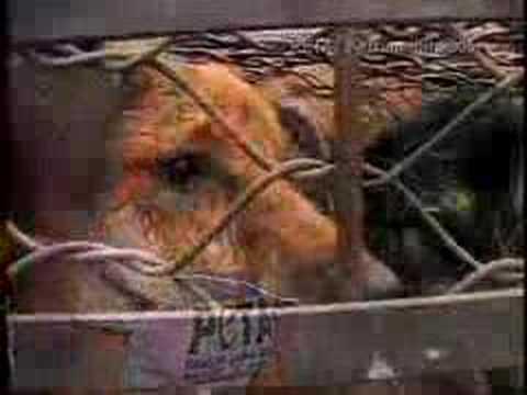 Michelle Manhart Goes Naked for PETA