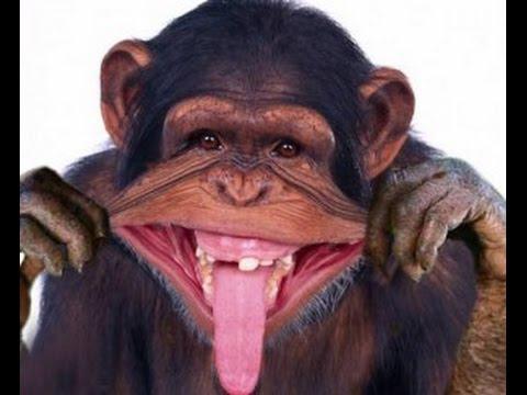 Download Monyet Terlucu sedunia.. Nyesel kalo gak nonton