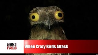 When Crazy Birds Attack Compilation