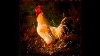 Анекдот от АЛЕКСАНДРА про секс петуха и курицы зимой 2017