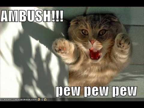Lol Cats #2 - YouTube