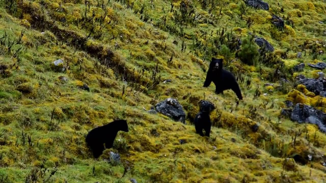 Oso Cerca A Parque Natural Chingaza Youtube