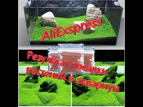 Как посадить траву в аквариум