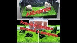 Али Экспресс _ Результат посадки семян в аквариум