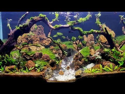 aquascape-tank-100-cm-(low-tech,-no-co2)-#napaqua04