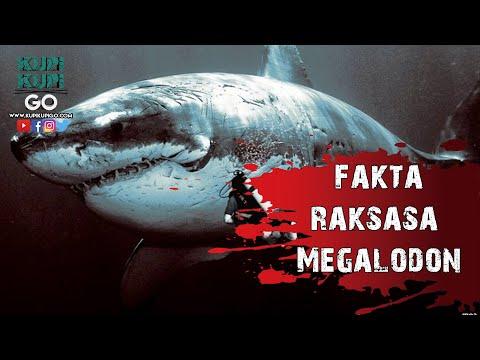 5 Fakta Menakutkan Raksasa Megalodon