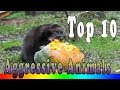 Top 10 Most Aggressive Animals In The World