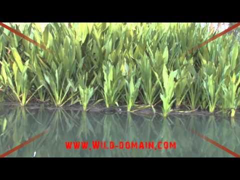 australia plants water 10sec