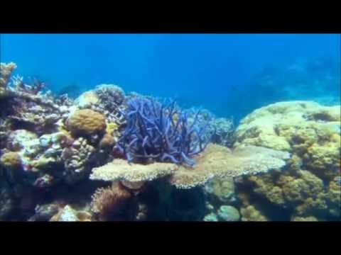 Profondo Blu   video con musica di Enya  amp  Vangelis  Come to me  1