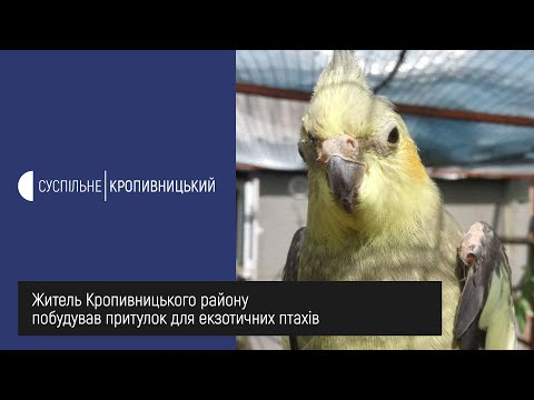 UA: Кропивницький: Житель Кропивницького району побудував притулок для екзотичних птахів