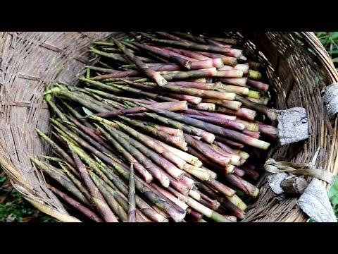 【欢子TV】实拍贵州大山里农村人的生活,一天可以拔上千斤竹笋