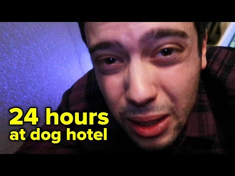 I Spent The Night At A Dog Hotel