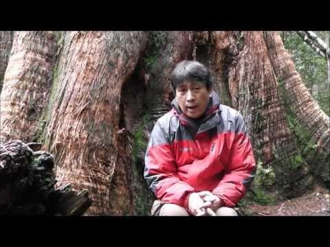 jatan visits observer tree
