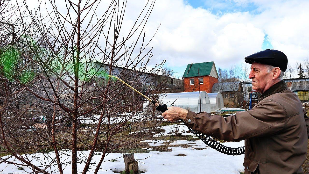 Урожай вишни +100% после этого! Апрельская важная обработка вишни весной от монилиоза и коккомикоза!