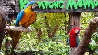 Farm In The City Malaysia 城の农场-金刚鹦鹉Macaw  Parrot