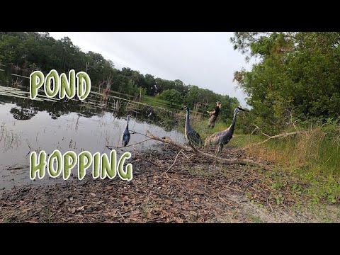 Good Ol' Fashioned Pond Hopping - 5/28/20