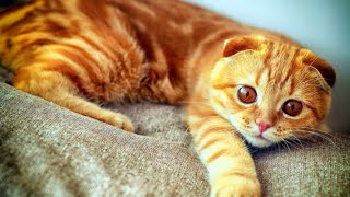 Веселые Котики!  Смешное Видео с Кошками! Март 2015. №9