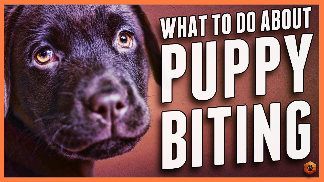 Puppy Biting - Simpawtico Dog Training