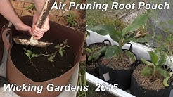 Air pruning Root Pouch Wicking Gardens. Sowing carrot seeds, planting slips & some spuds.