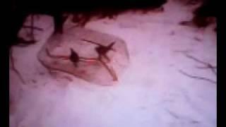 Ловушка на фазана 2012(смотрите и учитесь как нужно ловить фазанчика жывым., 2012-02-26T20:11:09.000Z)