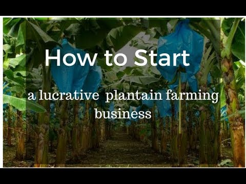 Basic Knowledge needed to establish a Plantain Pla