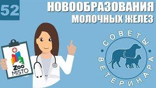 Новообразования молочных желез | Причины образования опухолей | Лечение проблемы | Советы Ветеринара