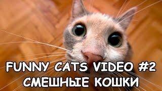 Funny Cats video #2 - Смешные кошки 2 -  Кошки приколы