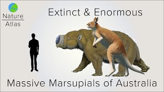 Extinct & Enormous: The Massive Marsupials of Australia
