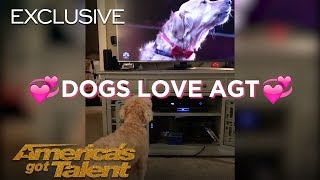 Dogs React To Singing Dog   America's Got Talent 2018