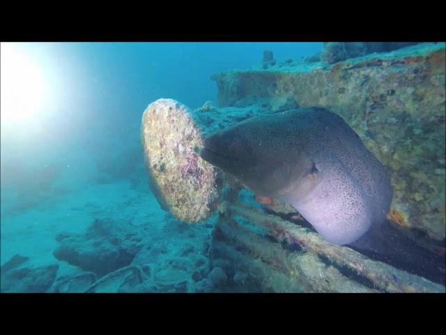 Sub Aqua Club Wiltz @ Red Sea Deepnorth Tour (Liveaboard MY BLUE)