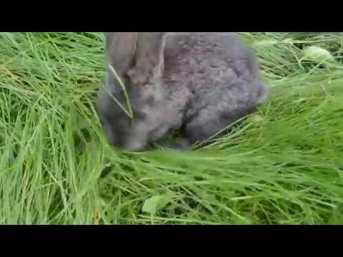 Курицы и Кролики. Видео про животных, смешное до слез