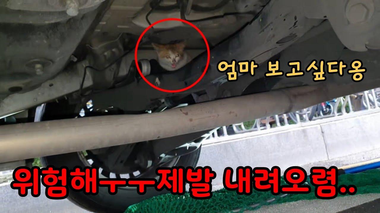 아기고양이가 택시에 올라탔어요😰[고양이탐정]Rescue of a baby cat inside a car bonnet