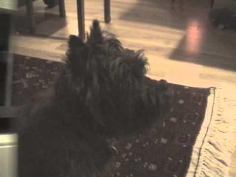 Adopt A Dog In Yuma Az