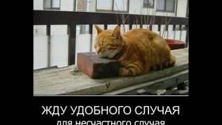 подборка приколов.пьяные девушки.животные))
