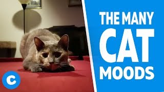 The Many Cat Moods | Chewy