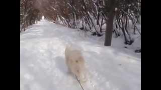 年末年始に降った雪がフカフカで楽しく犬ゾリ。