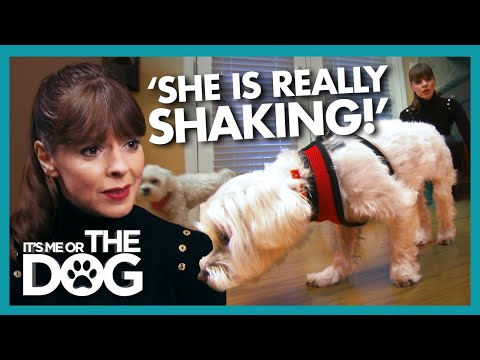 Victoria Distressed By Dog TERRIFIED of Wooden Floors | It's Me or The Dog